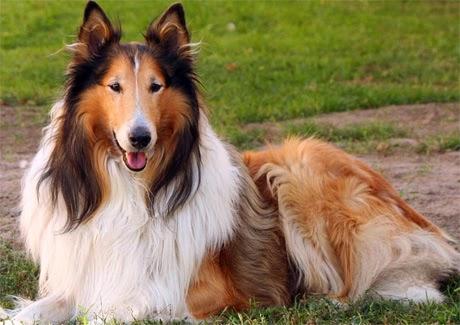 el perro que suelta mucho pelo