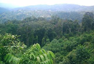 Ciri-Ciri Bioma Hutan Hujan Tropis