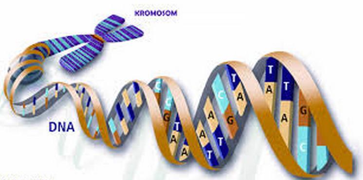 Mengenal Teknologi DNA Rekombinan