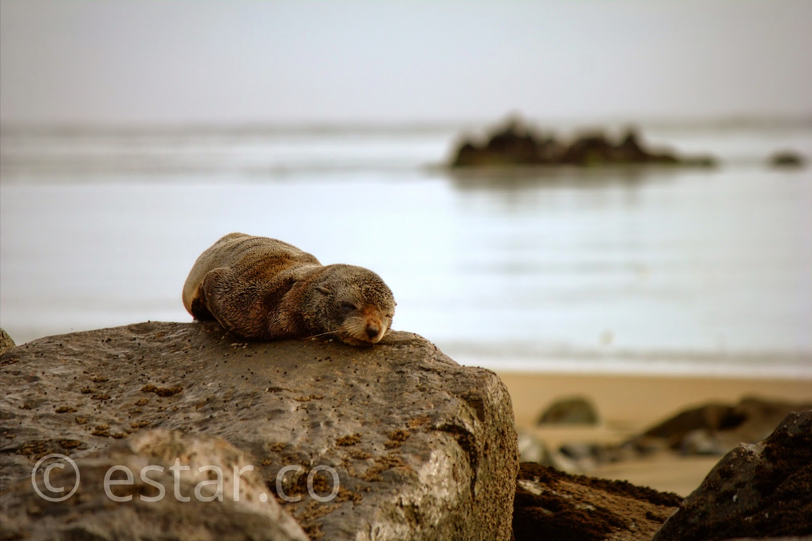 Photo of a seal pup resting on a rock