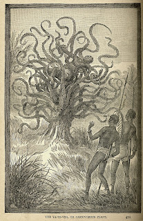 THE MADAGASCAN MAN-EATING TREE - MORE THAN JUST A MONSTROUS MYTH? 27