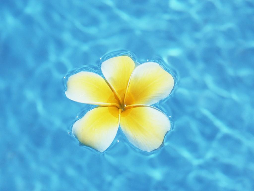 Blue hawaiian flowers wallpaper background 1024 x 768 flower blue hawaiian flowers wallpaper background 1024 x 768 izmirmasajfo Images