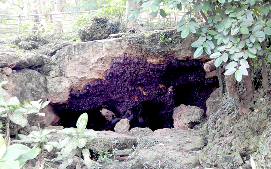 The World's Largest Fruit Bat Cave in the Philippines
