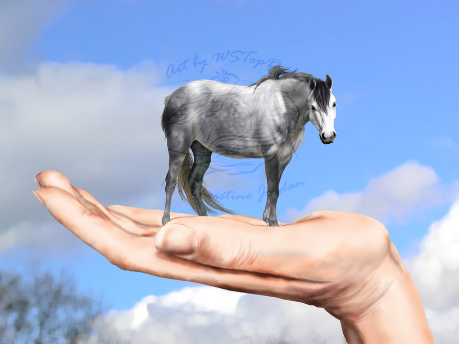The smallest horse in the world ever - photo#6