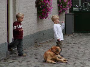 twin boys and dog. Stock Photo credit: glumus