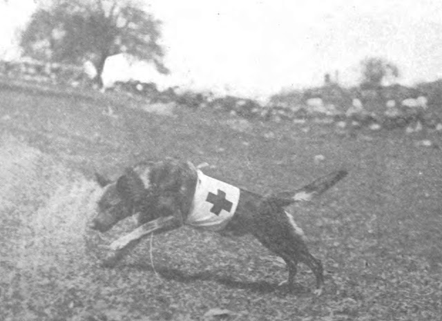 Messenger Dogs In World War