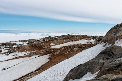 Tryne Islands Iceberg Alley