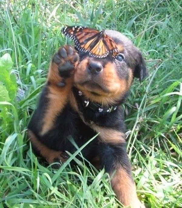 Cute dogs - part 4 (50 pics), dog pictures, puppy plays with butterfly