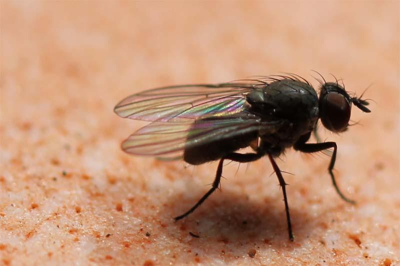 Fliege von Nahem