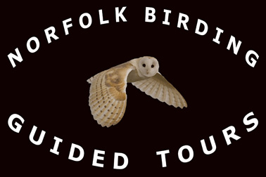 Norfolk Birding Guided Birding and Wildlife Photography
