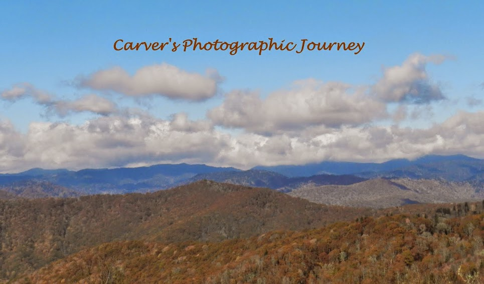 Carver's Photographic Journey
