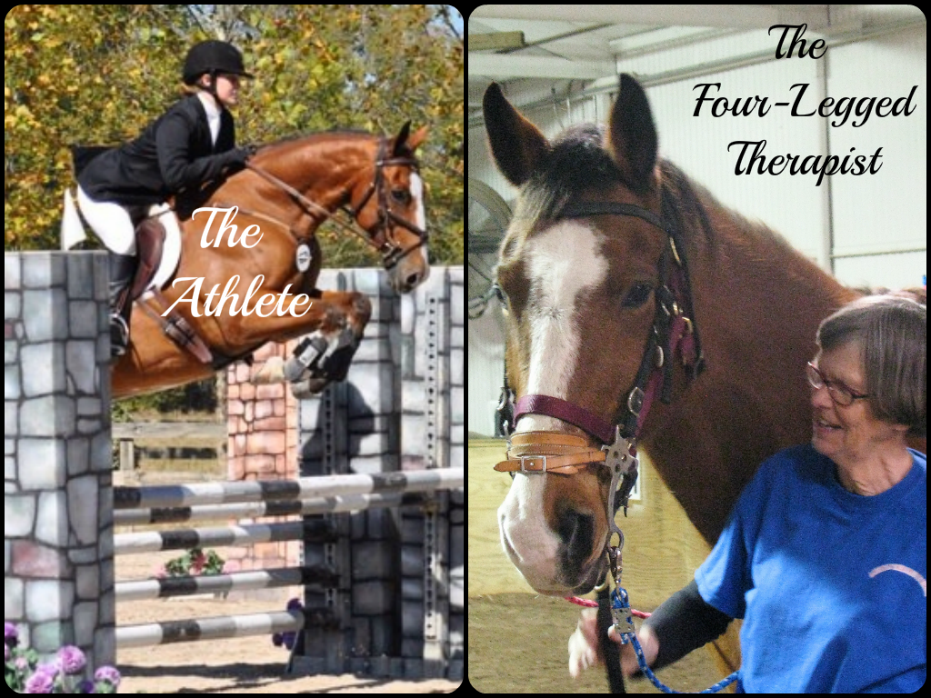 Most Inspiring   Wallpaper Horse Collage - scottiecollage  Perfect Image Reference_182071.png
