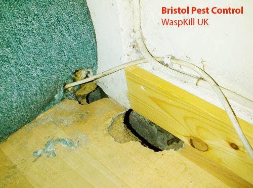 rats eat through floor