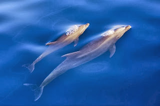 Dolphin calling names