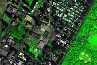 Το πράσινο στις πόλεις καταστέλλει το έγκλημα - Έρευνα