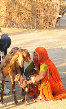 Goatery Project for Tribal Woman