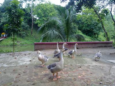 duck meghla bandarban