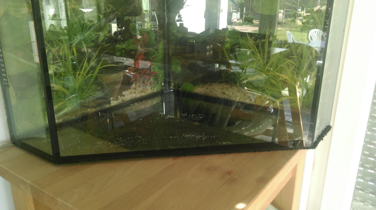 Tisch Aquarium In Terrarium