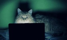 Красивый кот перед ноутбуком в темноте