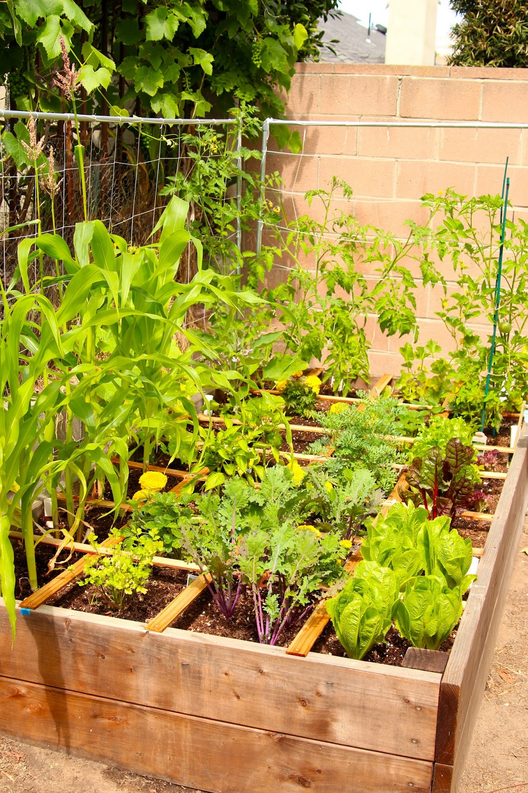 Sandpaper And Silly Putty Raised Bed Gardening For Beginners