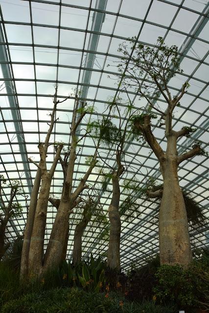 Flower Dome Singapore