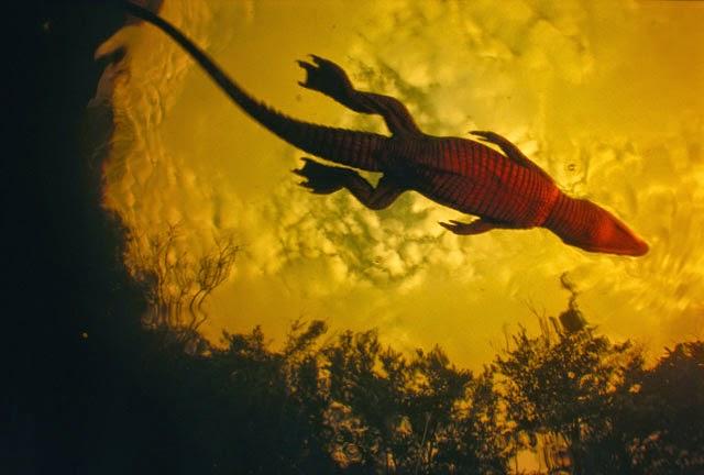 Michael Nichols, Fotografía de Vida Silvestre