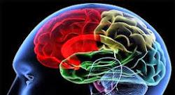 Jangan Abaikan Hal Sepele Penyebab Otak Mengecil