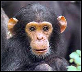 Funny Animals: Cute Baby Monkeys