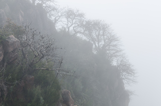 low cloud over trees on cliff