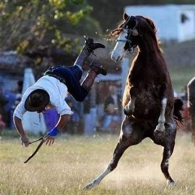 foto-foto binatang lucu
