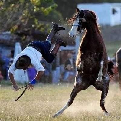 gambar lucu binatang