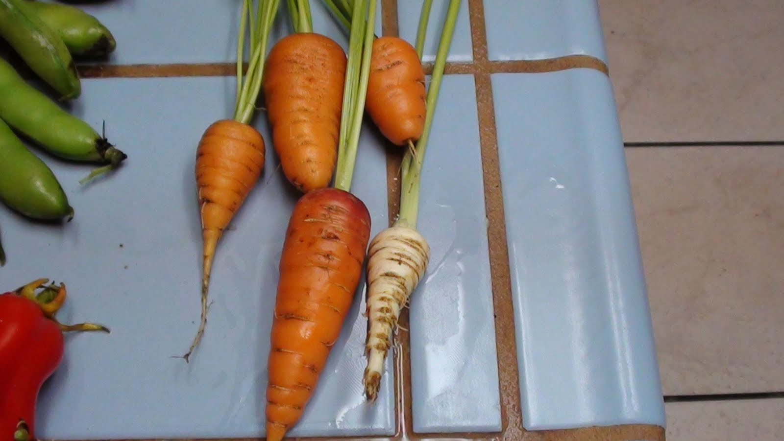 ∞ Root vegetables ∞
