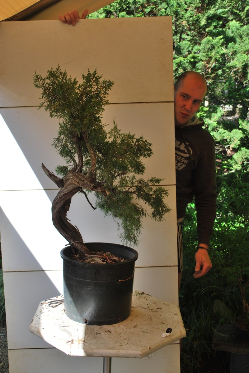 The Bonsai Society Of South Jersey Mauro Stemberger At Natures