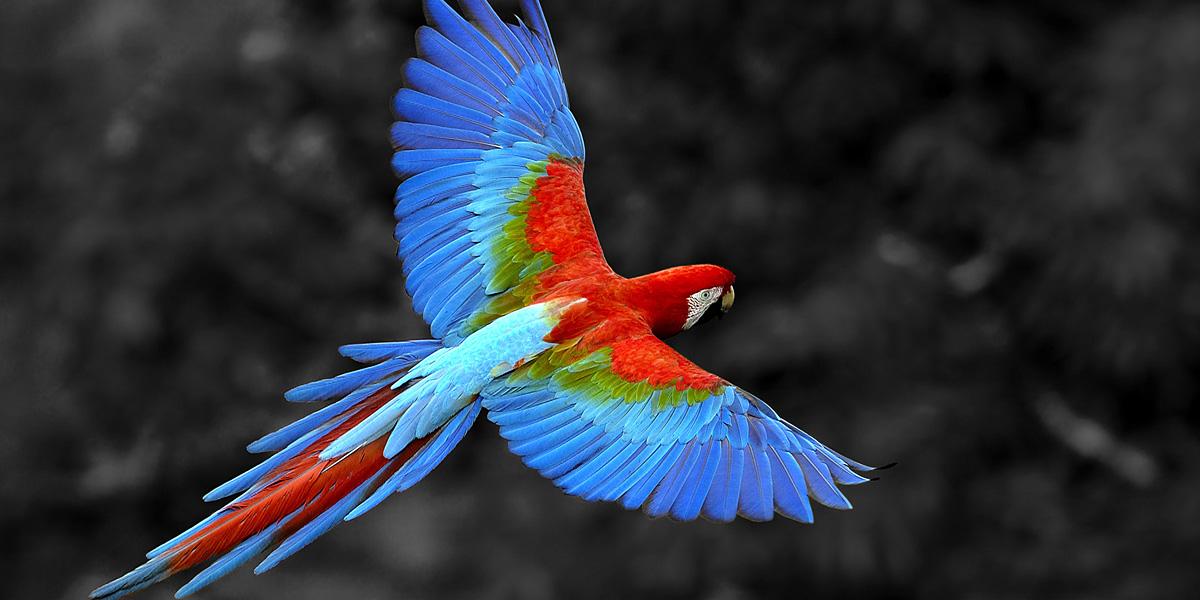 Rainbow 300+ Muhteşem HD Twitter Kapak Fotoğrafları