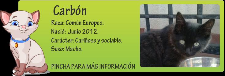 http://mirada-animal-toledo.blogspot.com.es/2013/07/carbon-peque-precioso-en-adopcion.html