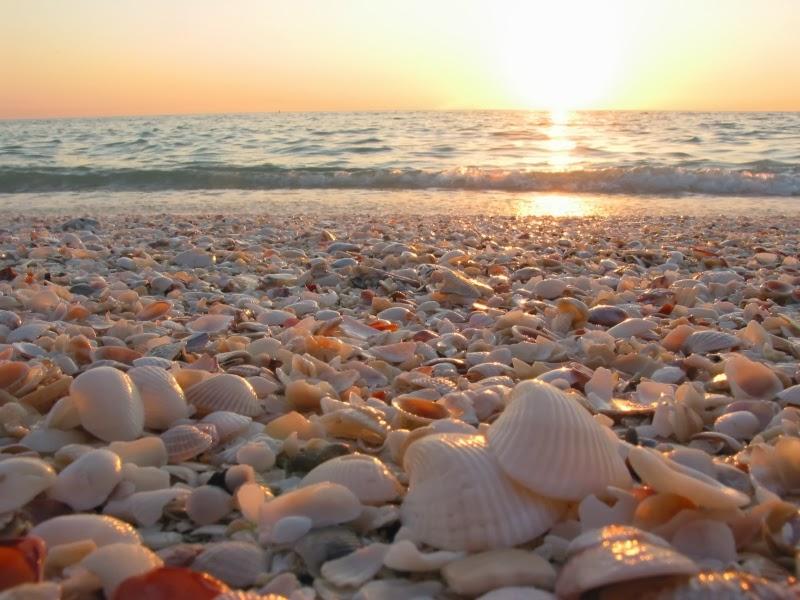 http://sarahstuartt.files.wordpress.com/2010/07/jessica-alba-beach-shells.jpg