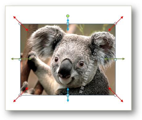 Gambar: Contoh gambar koala yang telah dipilih, dengan tambahan alat bantu untuk drag garis