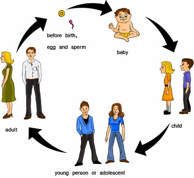 the social and developmental changes in the life of a woman Developmental psychology looks at how thinking, feeling, and behavior change throughout a person's life a significant proportion of theories within this discipline focus upon development.
