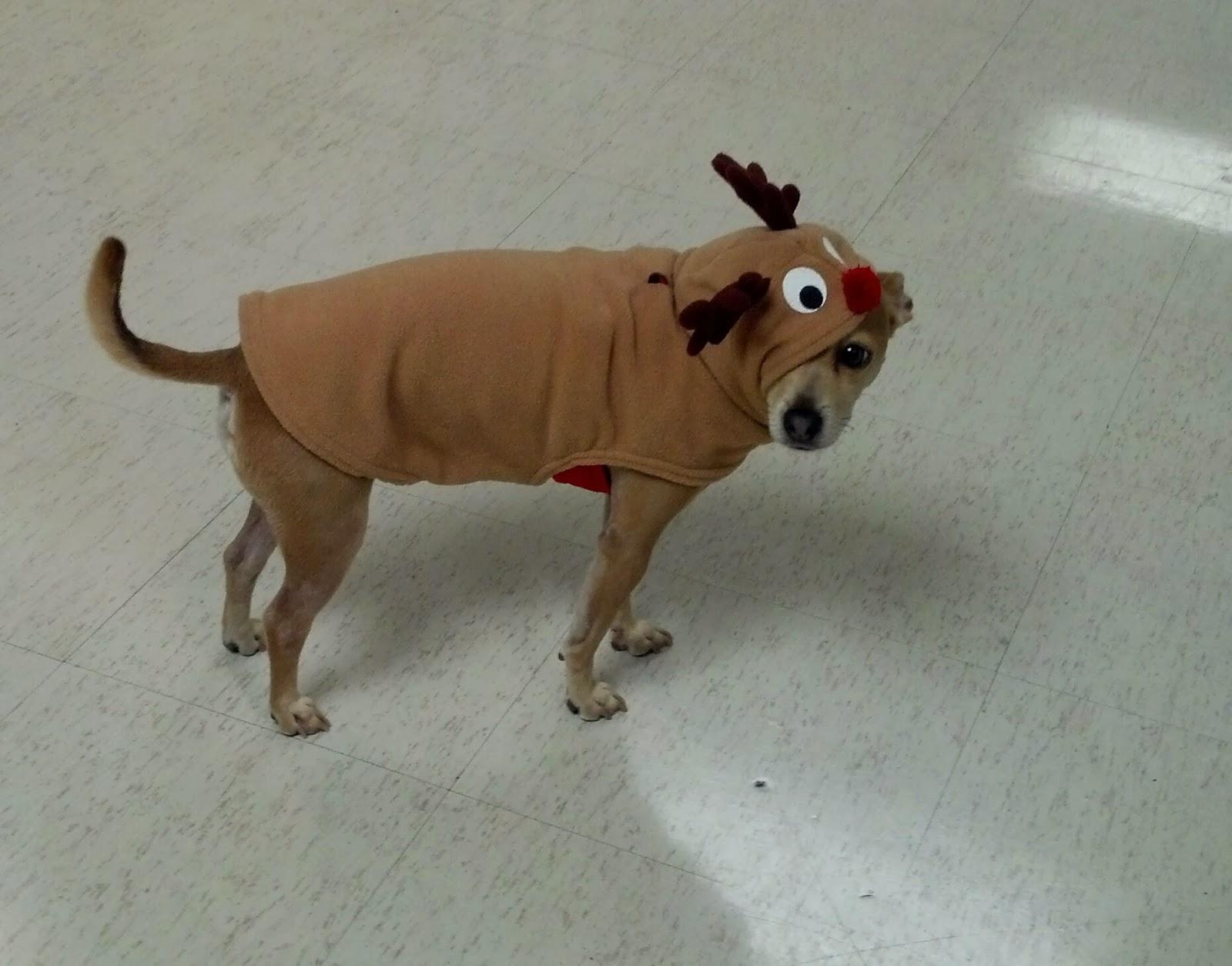 Real Santa And Rudolph Sightings - Viewing Gallery