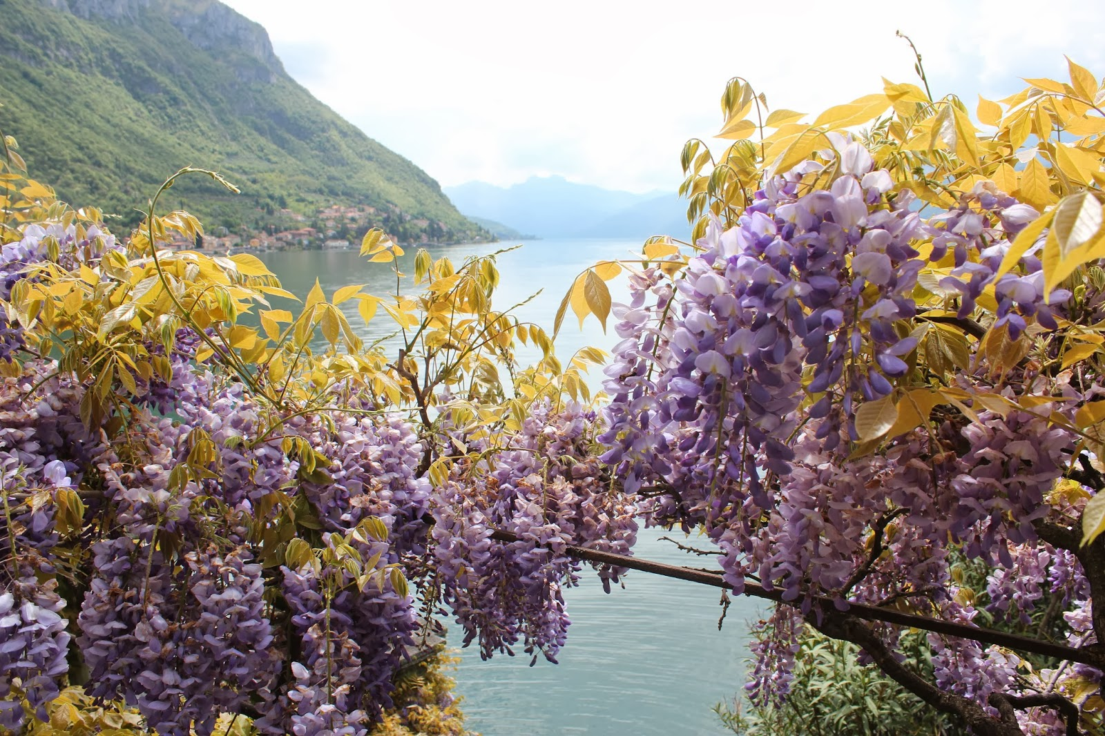 Italian Garden with Wisteria; Lake Como 3