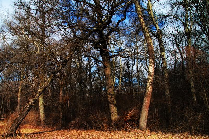 Vers le vent promenons nous dans les bois for Vers dans le bois