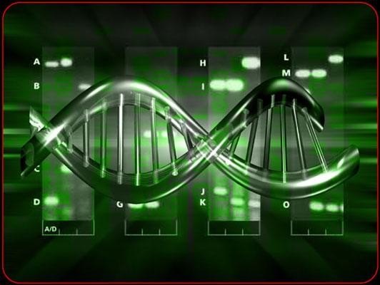Imagenes Del ADN