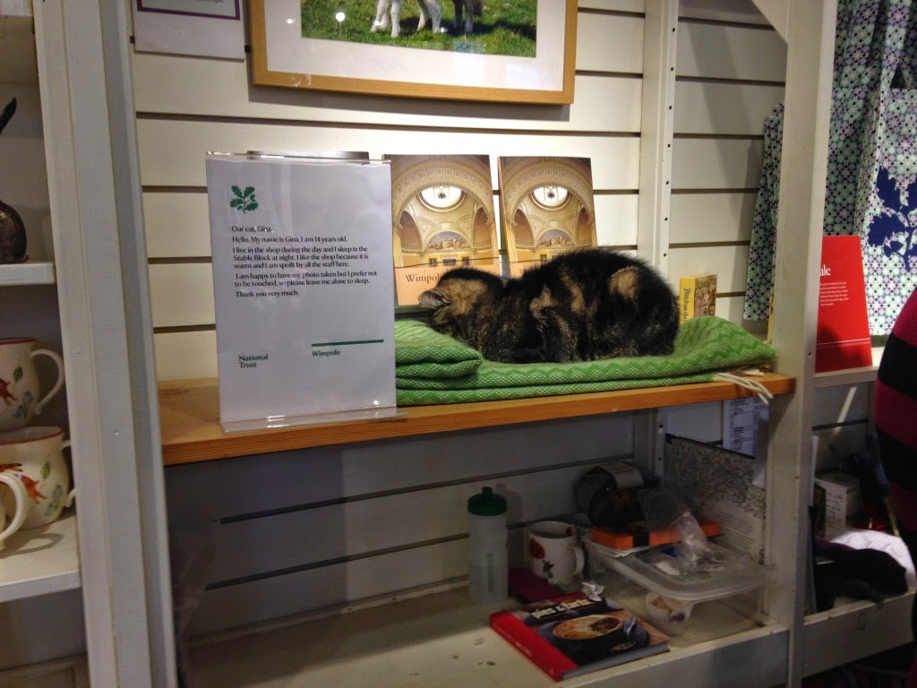 Gina the cat at Wimpole