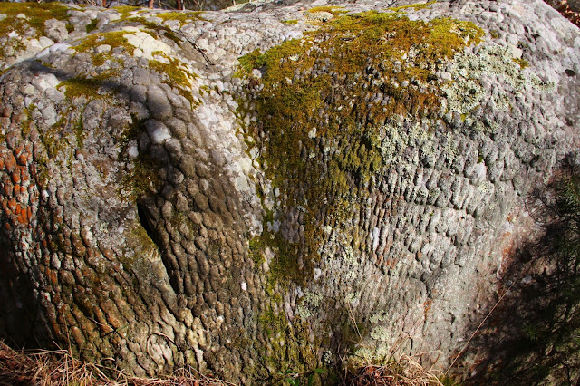 mousses, lichens et grès, Canche aux Merciers, Trois Pignons, (C) 2015 Greg Clouzeau