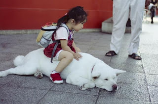 Funny Dog With Girl