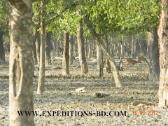 sundarbans tours