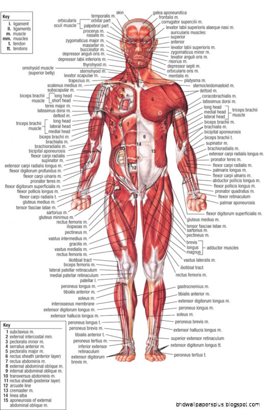 Human Anatomy Online Hd Wallpapers Plus