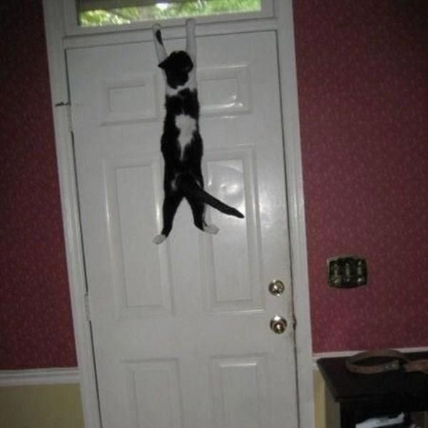 funny cat pictures, cat hang on door