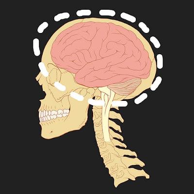 10 حقائق و معلومات علمية مذهلة عن المخ البشري %D9%85%D8%B9%D9%84%D