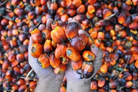aceite de palma,
